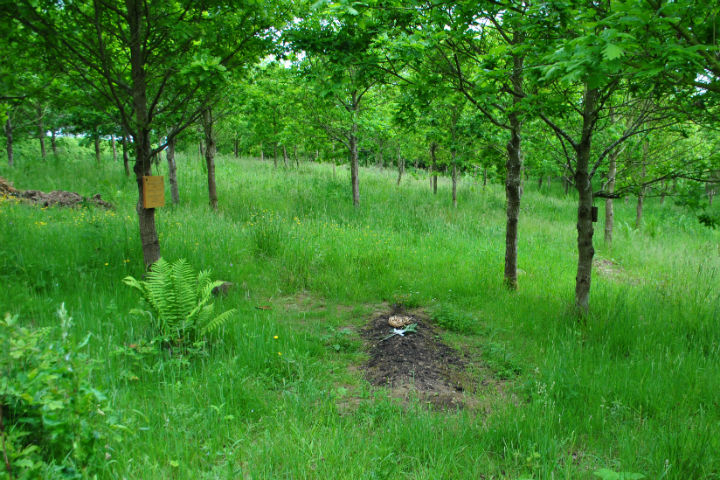 Green Burial 3 Tracing Green July 2015
